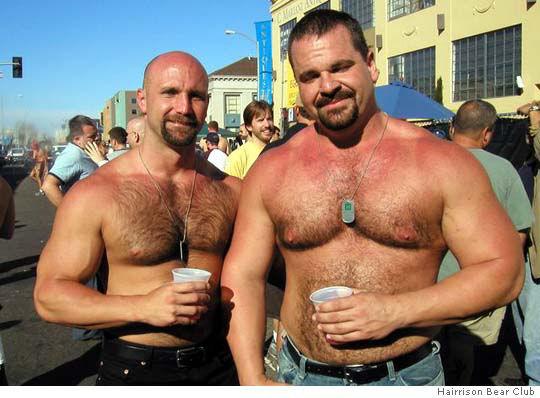 ursos gay